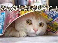 ネコ「みんなに知らせてね!」